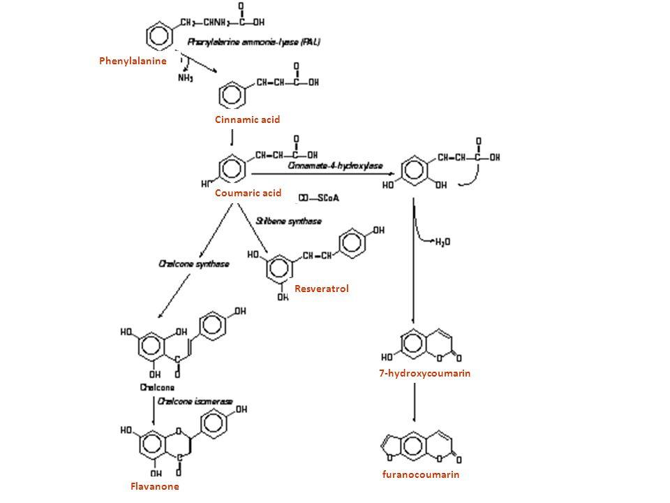 Phenylalanine Cinnamic acid Coumaric acid Resveratrol Flavanone 7-hydroxycoumarin furanocoumarin