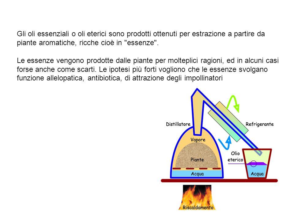 Gli oli essenziali o oli eterici sono prodotti ottenuti per estrazione a partire da piante aromatiche, ricche cioè in