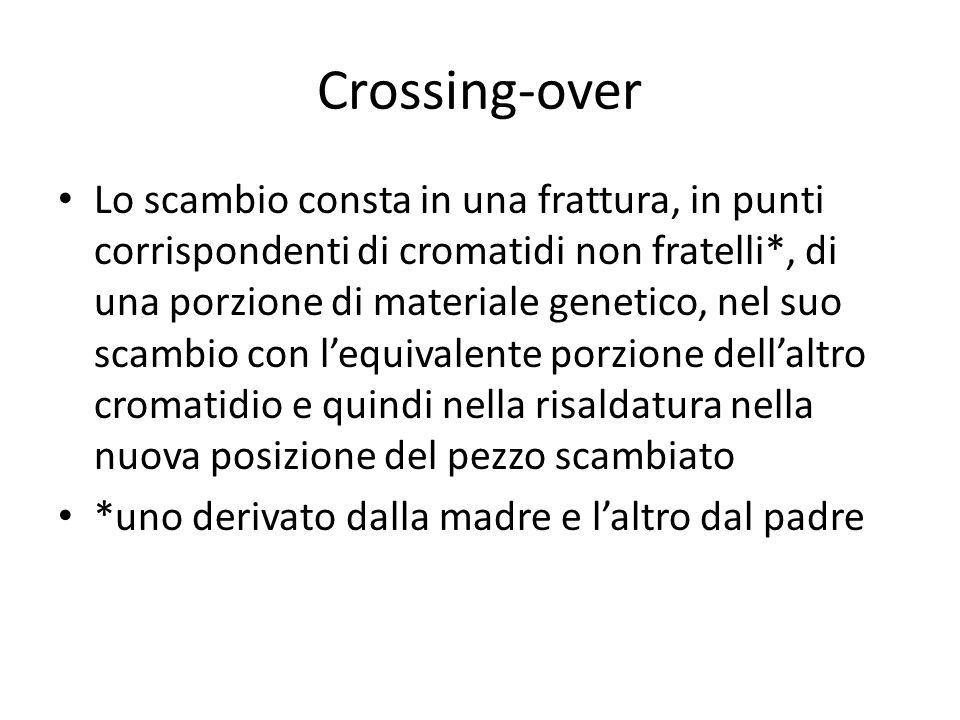 Crossing-over Lo scambio consta in una frattura, in punti corrispondenti di cromatidi non fratelli*, di una porzione di materiale genetico, nel suo sc