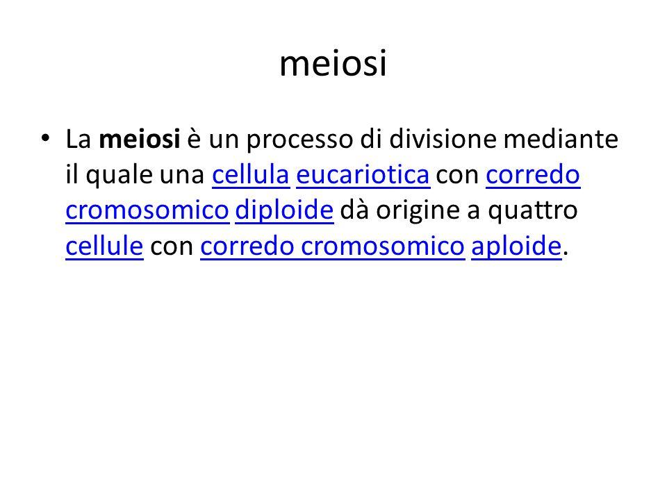 meiosi La meiosi è un processo di divisione mediante il quale una cellula eucariotica con corredo cromosomico diploide dà origine a quattro cellule co