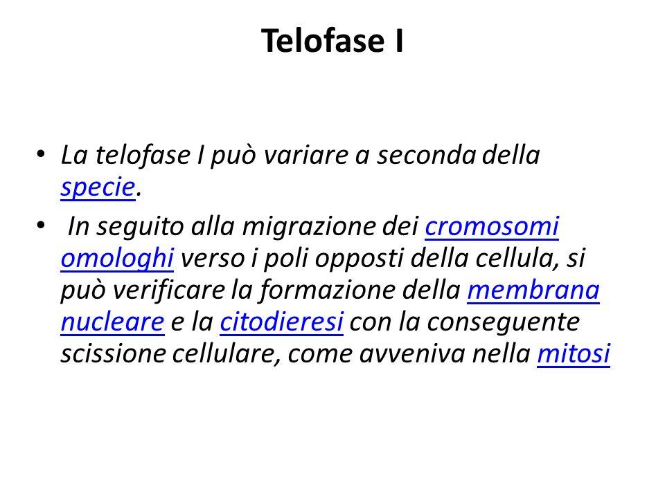 Telofase I La telofase I può variare a seconda della specie. specie In seguito alla migrazione dei cromosomi omologhi verso i poli opposti della cellu