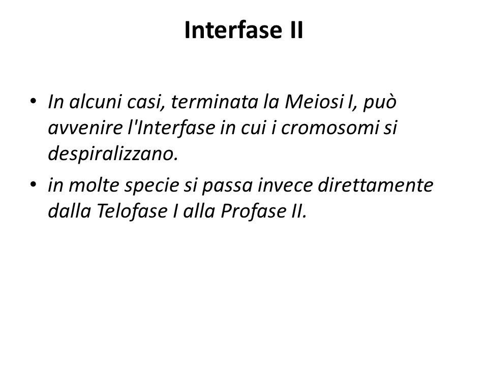 Interfase II In alcuni casi, terminata la Meiosi I, può avvenire l'Interfase in cui i cromosomi si despiralizzano. in molte specie si passa invece dir