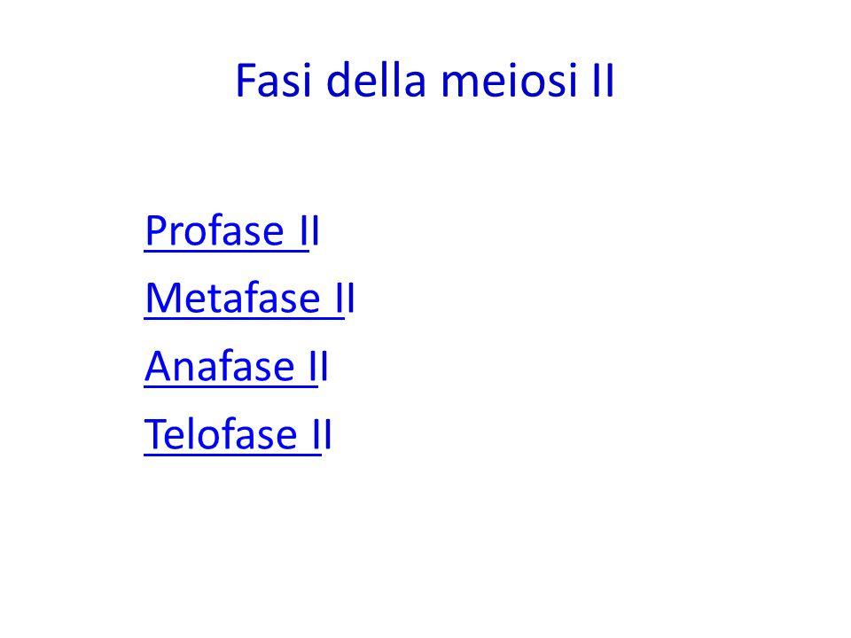 Fasi della meiosi II Profase IProfase II Metafase IMetafase II Anafase IAnafase II Telofase ITelofase II
