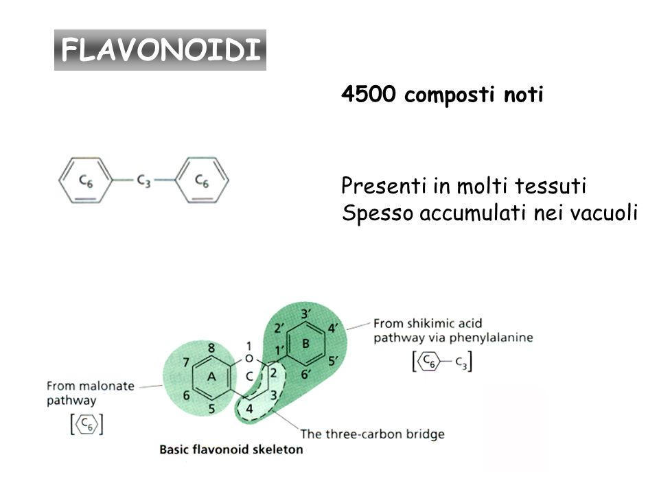 4500 composti noti Presenti in molti tessuti Spesso accumulati nei vacuoli FLAVONOIDI