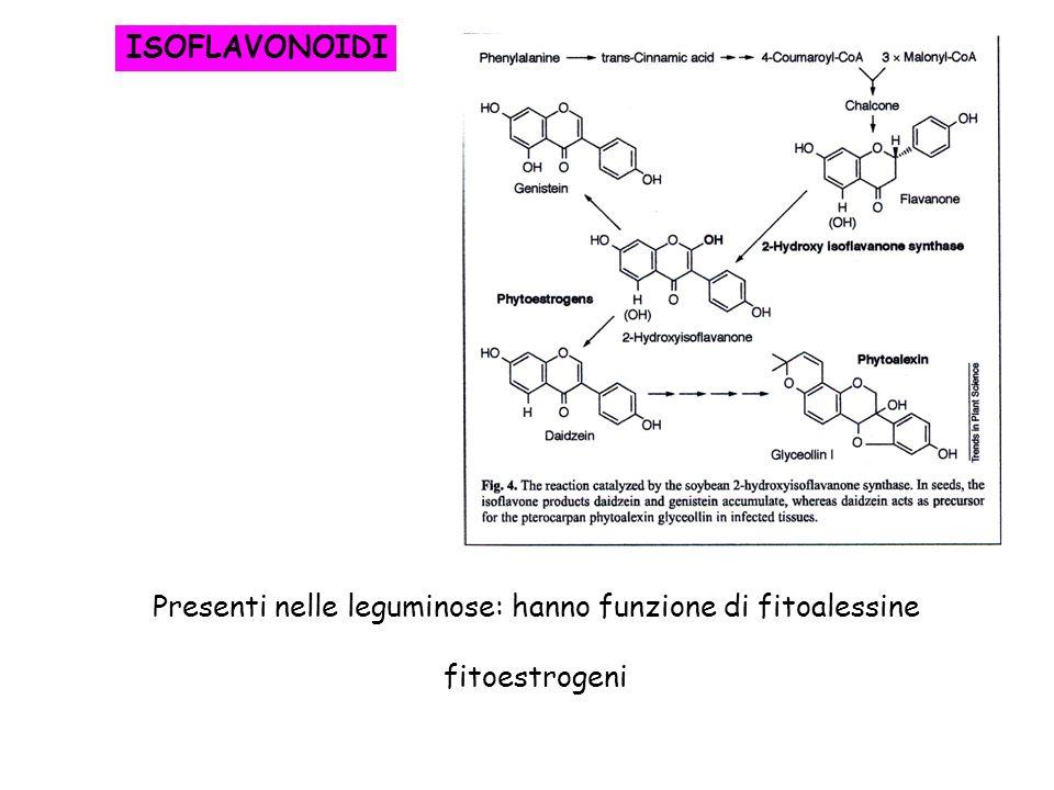 ISOFLAVONOIDI Presenti nelle leguminose: hanno funzione di fitoalessine fitoestrogeni