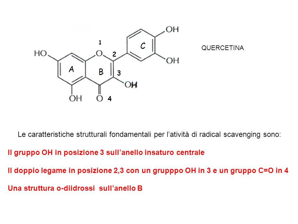 Le caratteristiche strutturali fondamentali per latività di radical scavenging sono: Il gruppo OH in posizione 3 sullanello insaturo centrale Il doppi