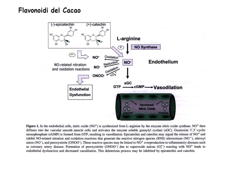 Flavonoidi del Cacao