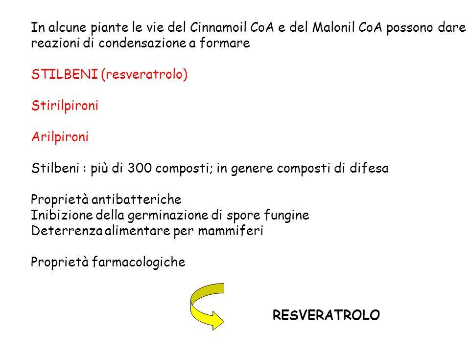 In alcune piante le vie del Cinnamoil CoA e del Malonil CoA possono dare reazioni di condensazione a formare STILBENI (resveratrolo) Stirilpironi Aril