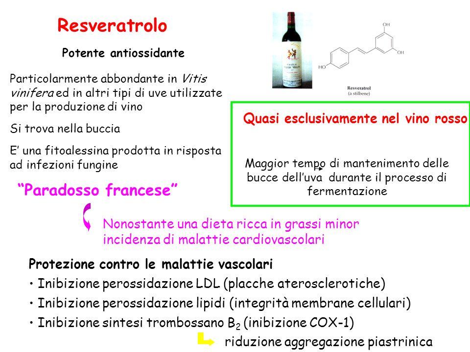 Resveratrolo Potente antiossidante Particolarmente abbondante in Vitis vinifera ed in altri tipi di uve utilizzate per la produzione di vino Si trova