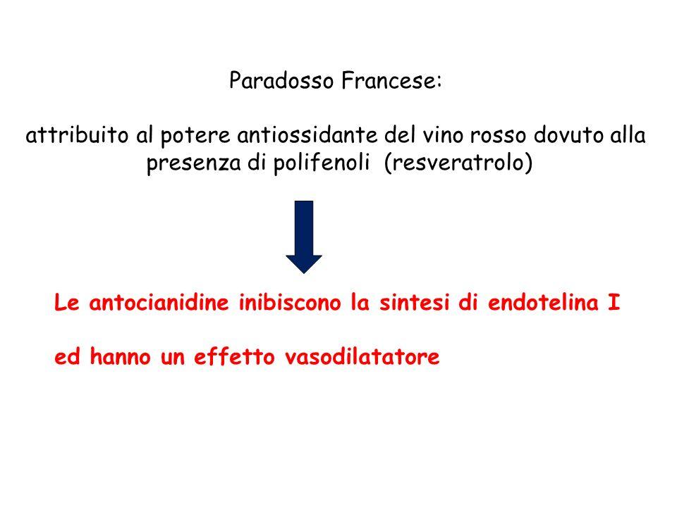 Le antocianidine inibiscono la sintesi di endotelina I ed hanno un effetto vasodilatatore Paradosso Francese: attribuito al potere antiossidante del v
