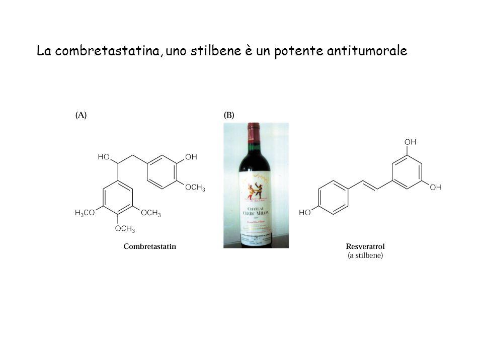 La combretastatina, uno stilbene è un potente antitumorale