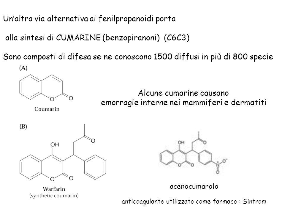 Unaltra via alternativa ai fenilpropanoidi porta alla sintesi di CUMARINE (benzopiranoni) (C6C3) Sono composti di difesa se ne conoscono 1500 diffusi