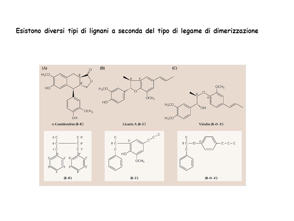 Esistono diversi tipi di lignani a seconda del tipo di legame di dimerizzazione