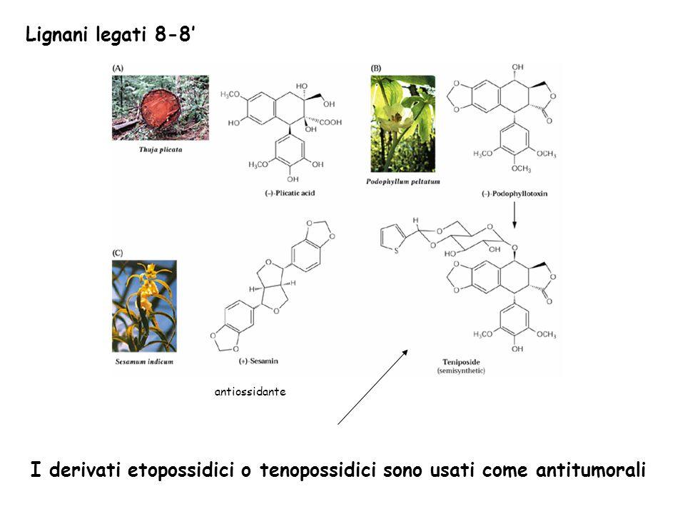 Lignani legati 8-8 I derivati etopossidici o tenopossidici sono usati come antitumorali antiossidante