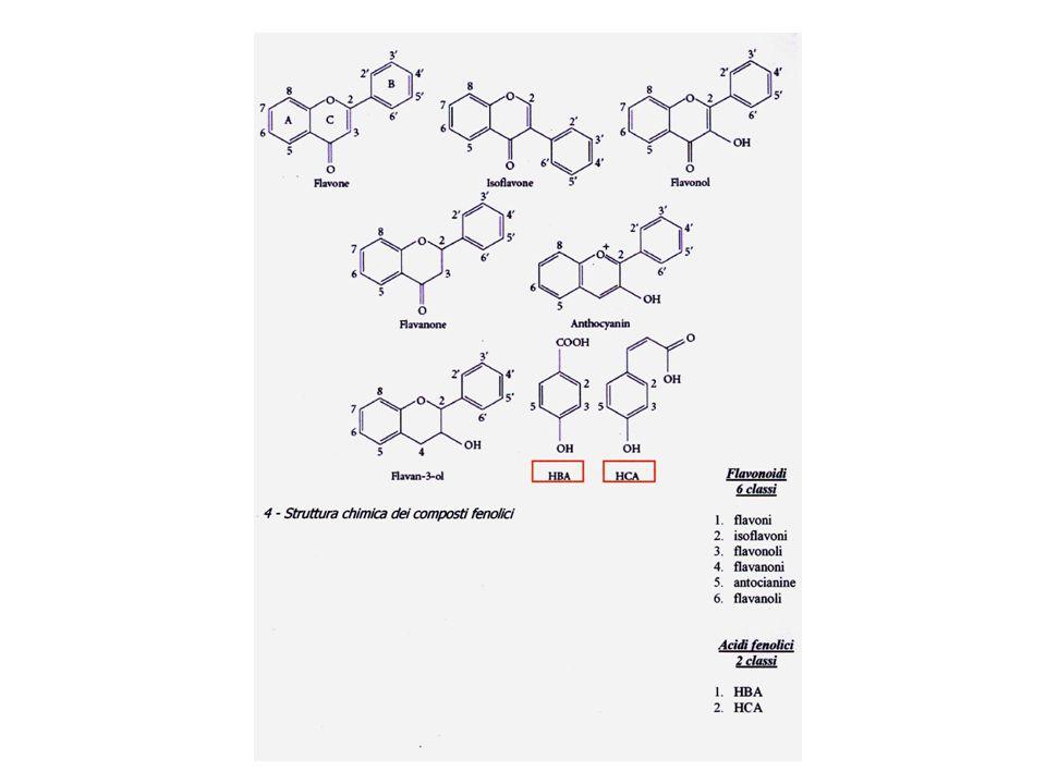 Alcaloidi derivanti da amminoacidi (ornitina, lisina, arginina, fenilalanina, tirosina, triptofano) Alcaloidi derivanti dalla purina Alcaloidi terpenici Alcaloidi polichetidici