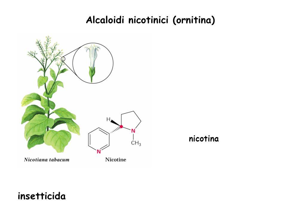 Alcaloidi nicotinici (ornitina) nicotina insetticida