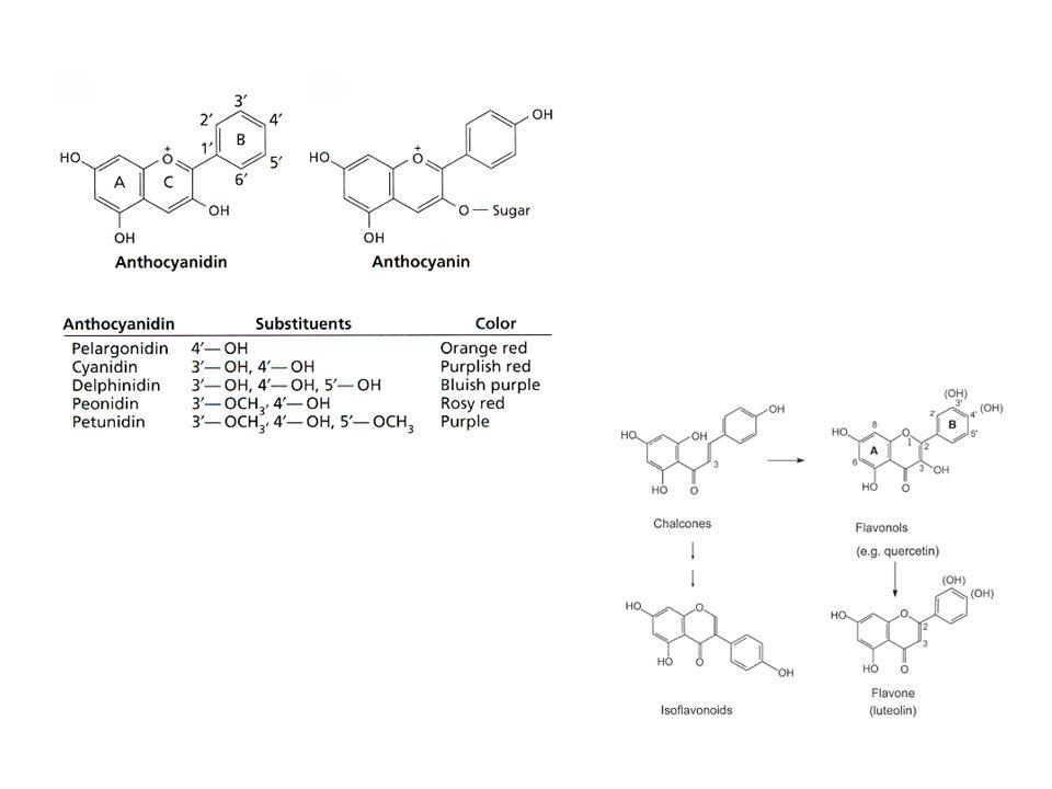 funzioni Colore dei frutti e dei fiori (antocianidine) Protezione UV-B Fitoalessine Fenomeni simbiontici Deterrenti alimentari (tannini)