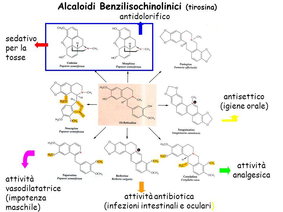 Alcaloidi Benzilisochinolinici (tirosina) antisettico (igiene orale) attività analgesica attività antibiotica (infezioni intestinali e oculari) attivi