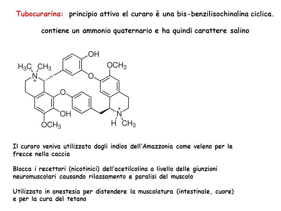 Tubocurarina: principio attivo el curaro è una bis-benzilisochinolina ciclica. contiene un ammonio quaternario e ha quindi carattere salino Il curaro