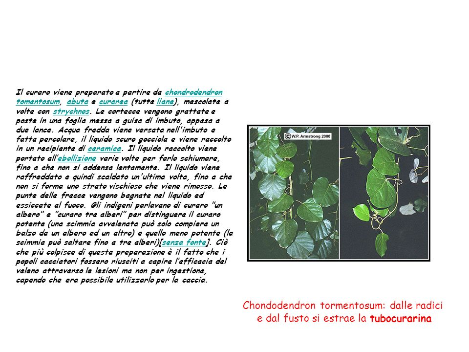 Il curaro viene preparato a partire da chondrodendron tomentosum, abuta e curarea (tutte liane), mescolate a volte con strychnos. Le cortecce vengono