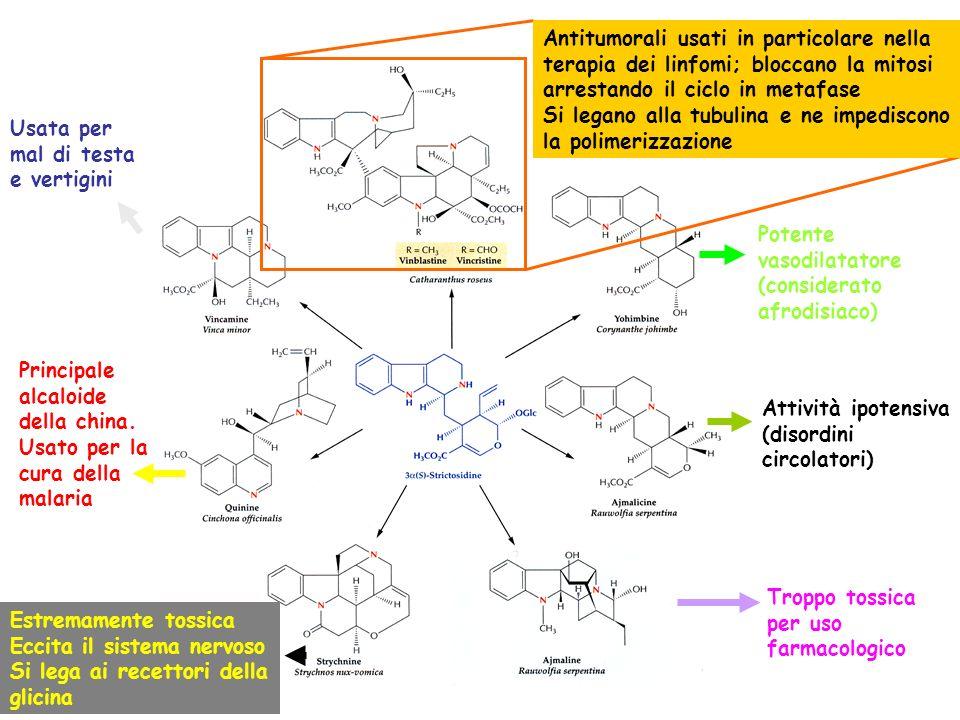 Principale alcaloide della china. Usato per la cura della malaria Potente vasodilatatore (considerato afrodisiaco) Estremamente tossica Eccita il sist
