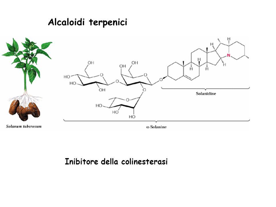 Alcaloidi terpenici Inibitore della colinesterasi