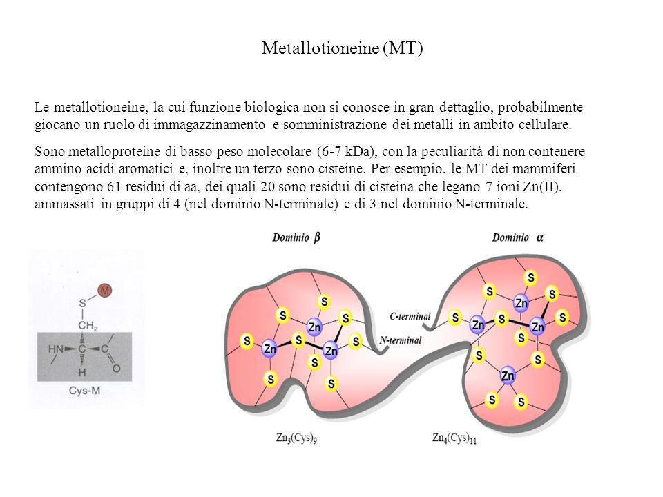 Struttura dellalcol deidrogenasi La presenza di due leganti cisteinato genera un complesso di Zn(II) neutro.