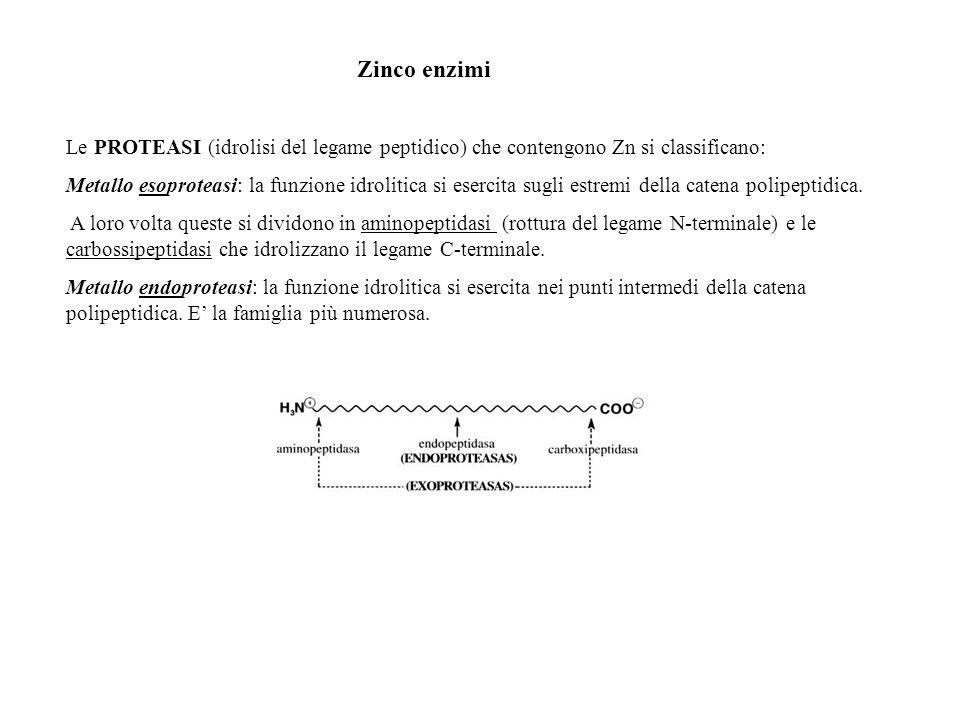 CARBOSSIPEPTIDASI A (CPA) E la più studiata: catalizza lidrolisi del legame peptidico C-terminale quando la catena laterale è un residuo aromatico o alifatico ramificato di un L-aminoacido.