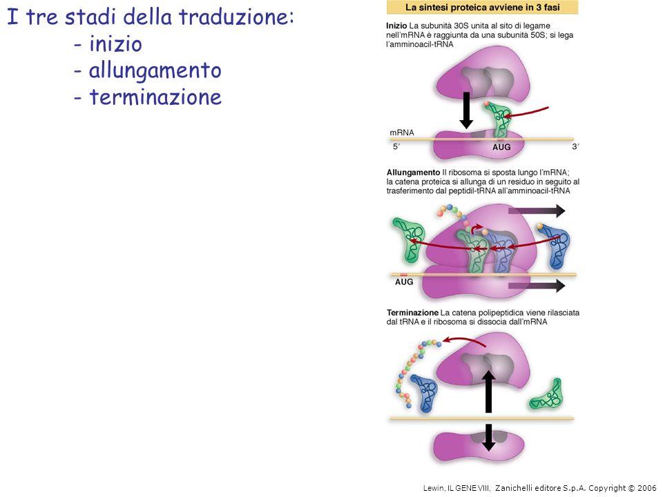 I tre stadi della traduzione: - inizio - allungamento - terminazione