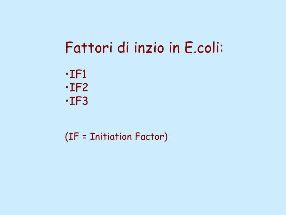 Fattori di inzio in E.coli: IF1 IF2 IF3 (IF = Initiation Factor)