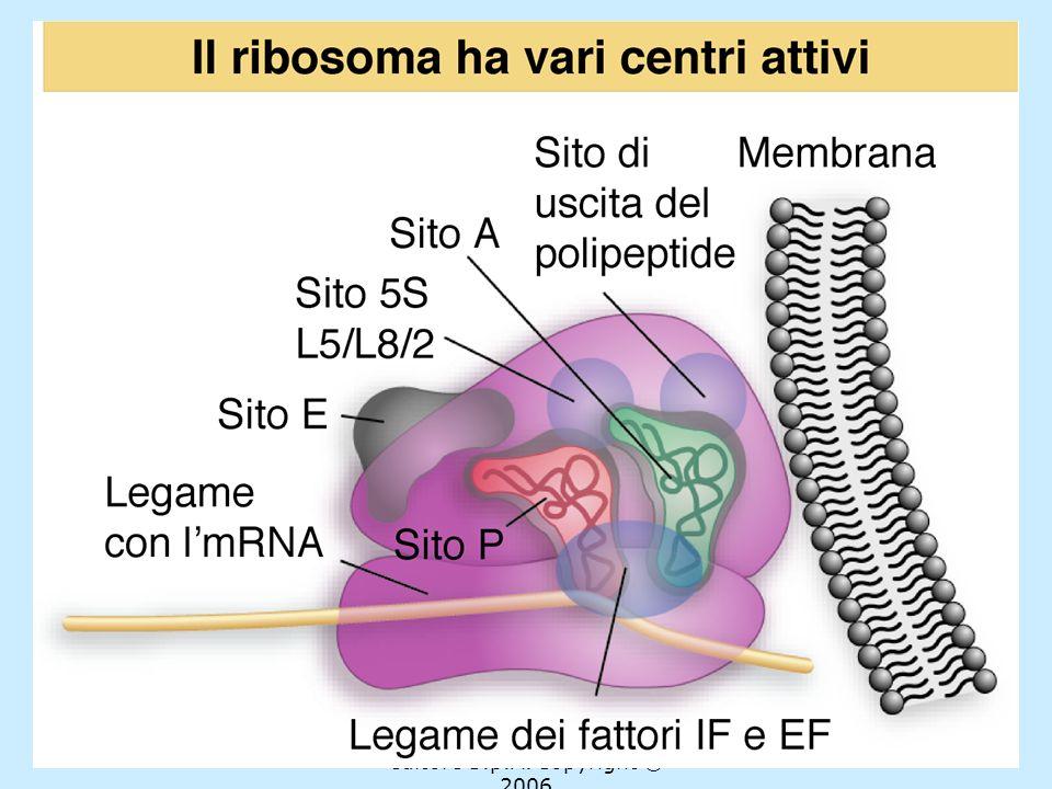 Assemblaggio del ribosoma