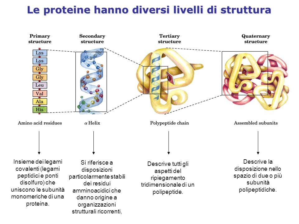 Le proteine hanno diversi livelli di struttura Insieme dei legami covalenti (legami peptidici e ponti disolfuro) che uniscono le subunità monomeriche