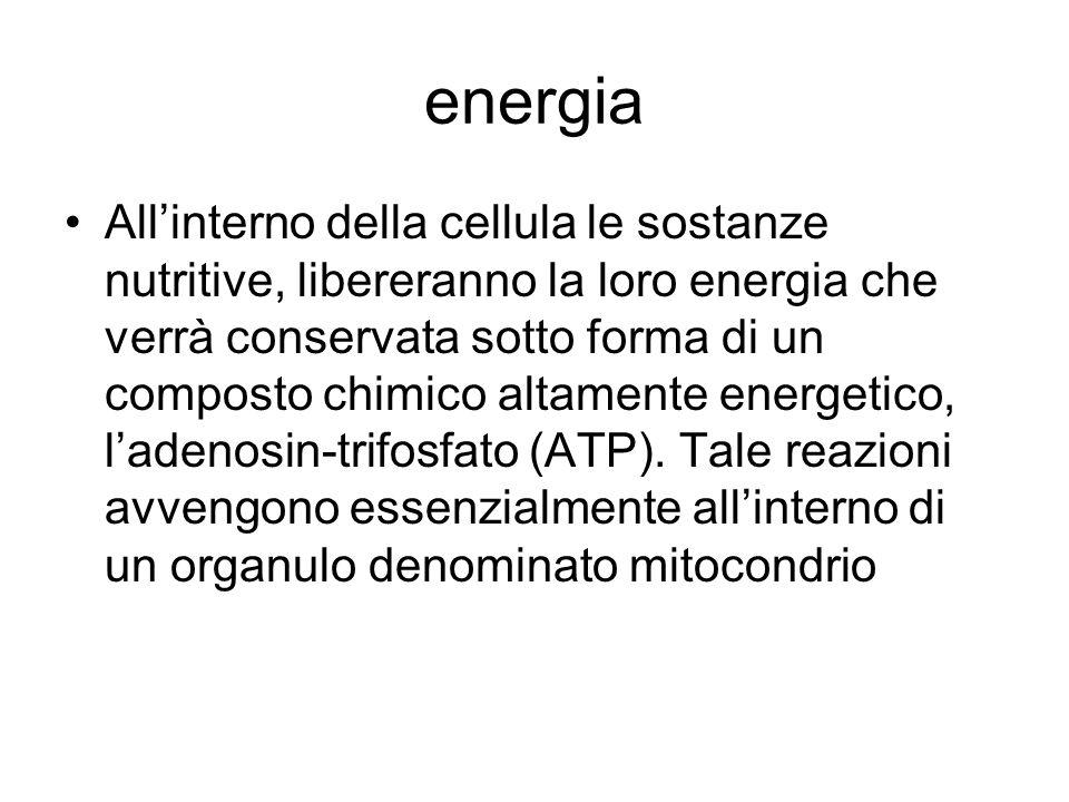 energia Allinterno della cellula le sostanze nutritive, libereranno la loro energia che verrà conservata sotto forma di un composto chimico altamente