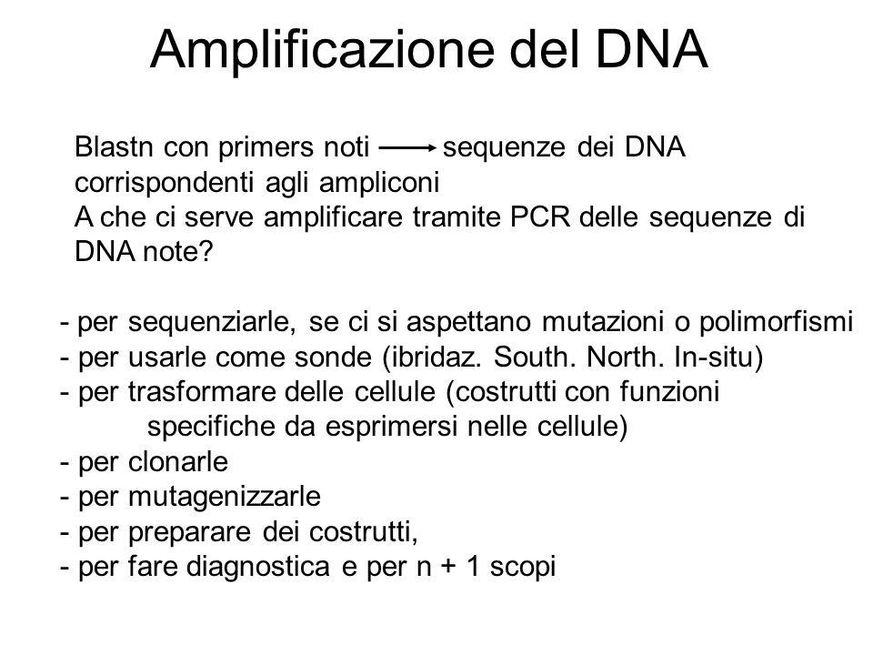 Differenze tra Southern, Northern e PCR Tramite analisi Southern si determina il peso (lunghezza) dei frammenti di restrizione su cui ibridano le sonde (marcate) Tramite analisi Northern si determina la presenza e la lunghezza di RNA trascritti, poliadenilati e non, contenenti la sequenza della sonda Tramite PCR si ottiene un amplificato corrispondente allamplicone compreso tra i due primers prescelti, selezionati, disegnati secondo i criteri che vedremo in seguito