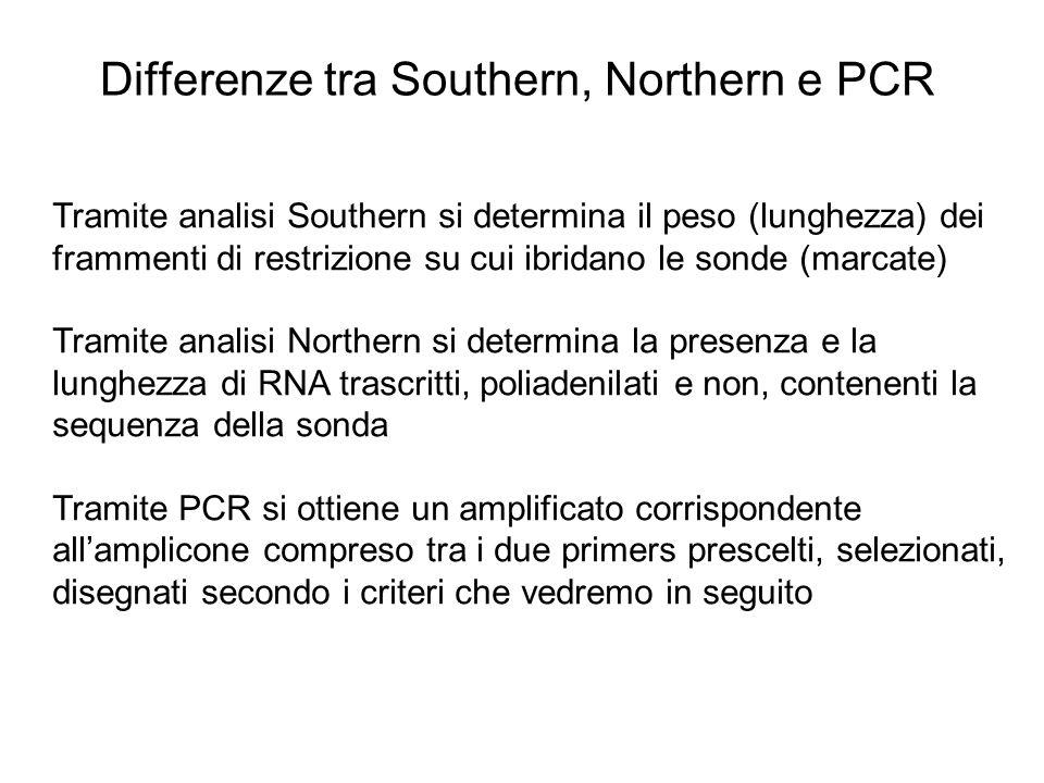 Differenze tra Southern, Northern e PCR Tramite analisi Southern si determina il peso (lunghezza) dei frammenti di restrizione su cui ibridano le sond