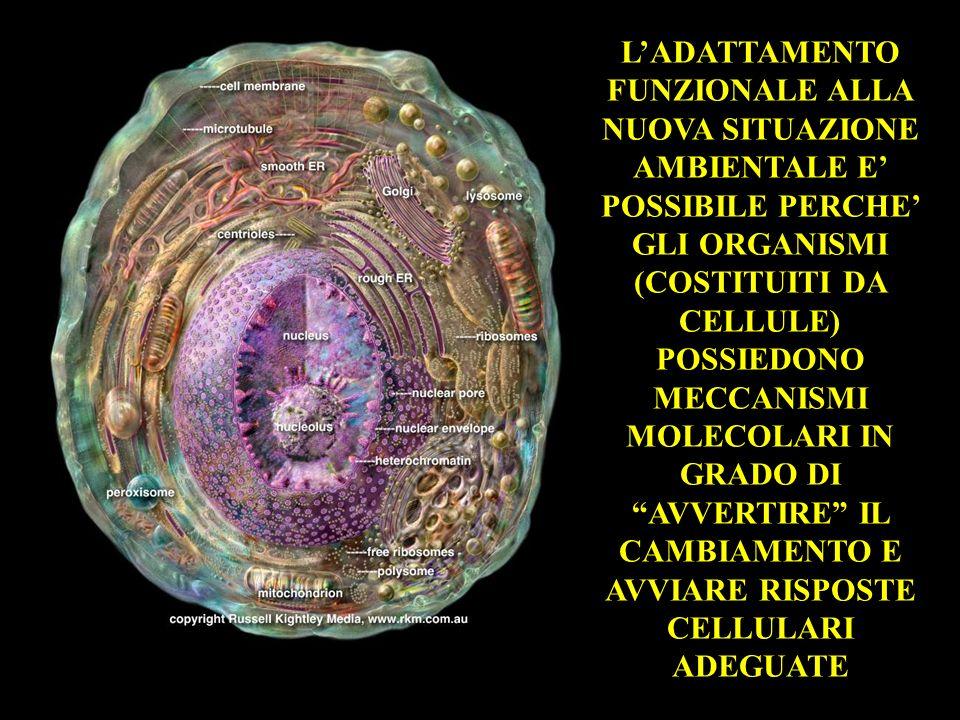 LADATTAMENTO FUNZIONALE ALLA NUOVA SITUAZIONE AMBIENTALE E POSSIBILE PERCHE GLI ORGANISMI (COSTITUITI DA CELLULE) POSSIEDONO MECCANISMI MOLECOLARI IN