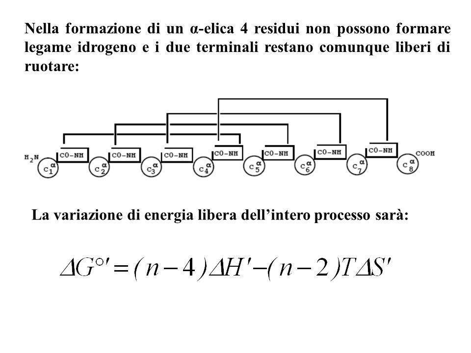 Nella formazione di un α-elica 4 residui non possono formare legame idrogeno e i due terminali restano comunque liberi di ruotare: La variazione di en
