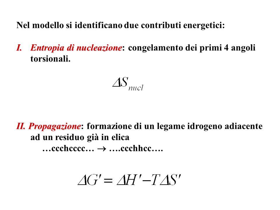 Nel modello si identificano due contributi energetici: I.Entropia di nucleazione I.Entropia di nucleazione: congelamento dei primi 4 angoli torsionali