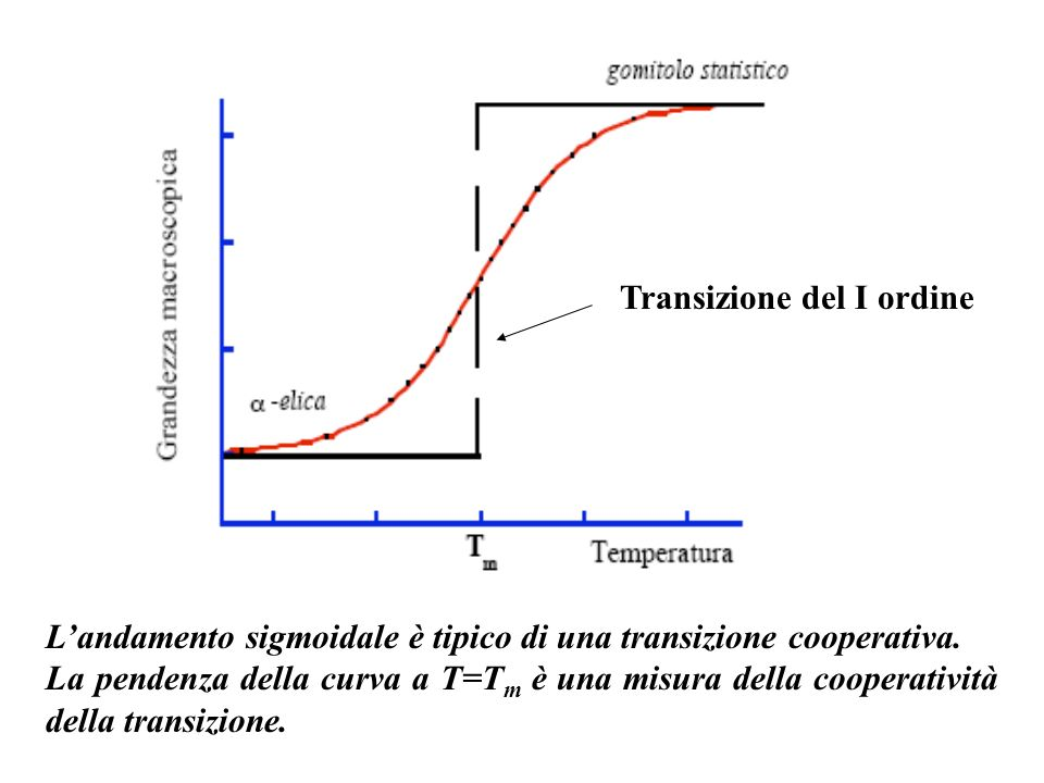 Landamento sigmoidale è tipico di una transizione cooperativa. La pendenza della curva a T=T m è una misura della cooperatività della transizione. Tra