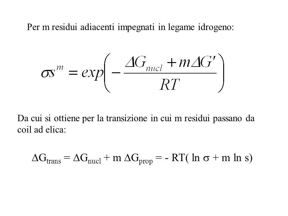 Per m residui adiacenti impegnati in legame idrogeno: Da cui si ottiene per la transizione in cui m residui passano da coil ad elica: G trans = G nucl