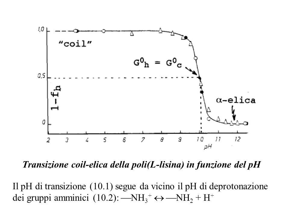 Transizione coil-elica della poli(L-lisina) in funzione del pH Il pH di transizione (10.1) segue da vicino il pH di deprotonazione dei gruppi amminici