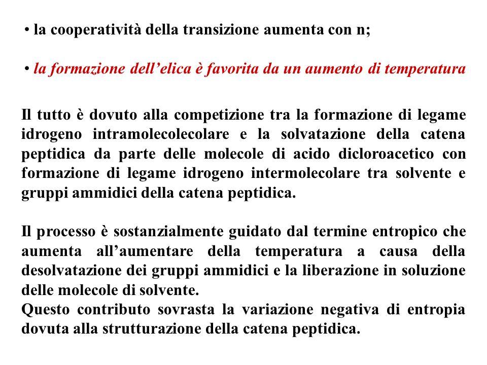 la cooperatività della transizione aumenta con n; la formazione dellelica è favorita da un aumento di temperatura Il tutto è dovuto alla competizione