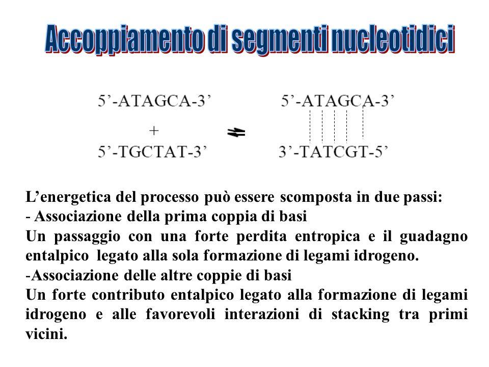 Lenergetica del processo può essere scomposta in due passi: - Associazione della prima coppia di basi Un passaggio con una forte perdita entropica e i