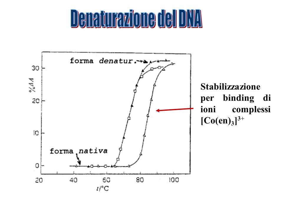 Stabilizzazione per binding di ioni complessi [Co(en) 3 ] 3+
