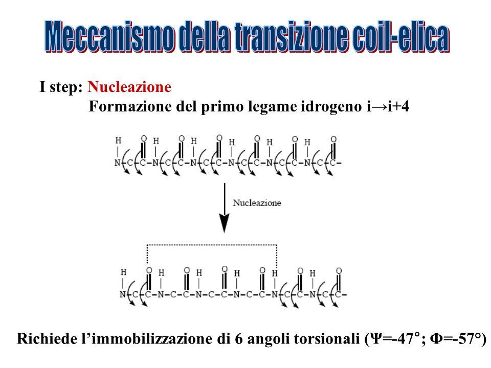 I step: Nucleazione Formazione del primo legame idrogeno ii+4 Richiede limmobilizzazione di 6 angoli torsionali (Ψ=-47°; Φ=-57°)