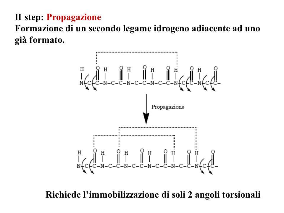 II step: Propagazione Formazione di un secondo legame idrogeno adiacente ad uno già formato. Richiede limmobilizzazione di soli 2 angoli torsionali