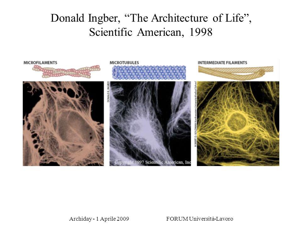 Archiday - 1 Aprile 2009 FORUM Università-Lavoro Donald Ingber, The Architecture of Life, Scientific American, 1998