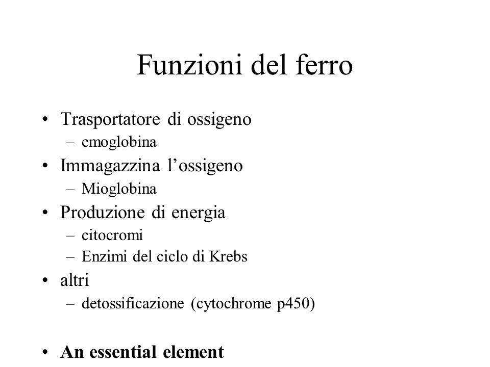 Funzioni del ferro Trasportatore di ossigeno –emoglobina Immagazzina lossigeno –Mioglobina Produzione di energia –citocromi –Enzimi del ciclo di Krebs