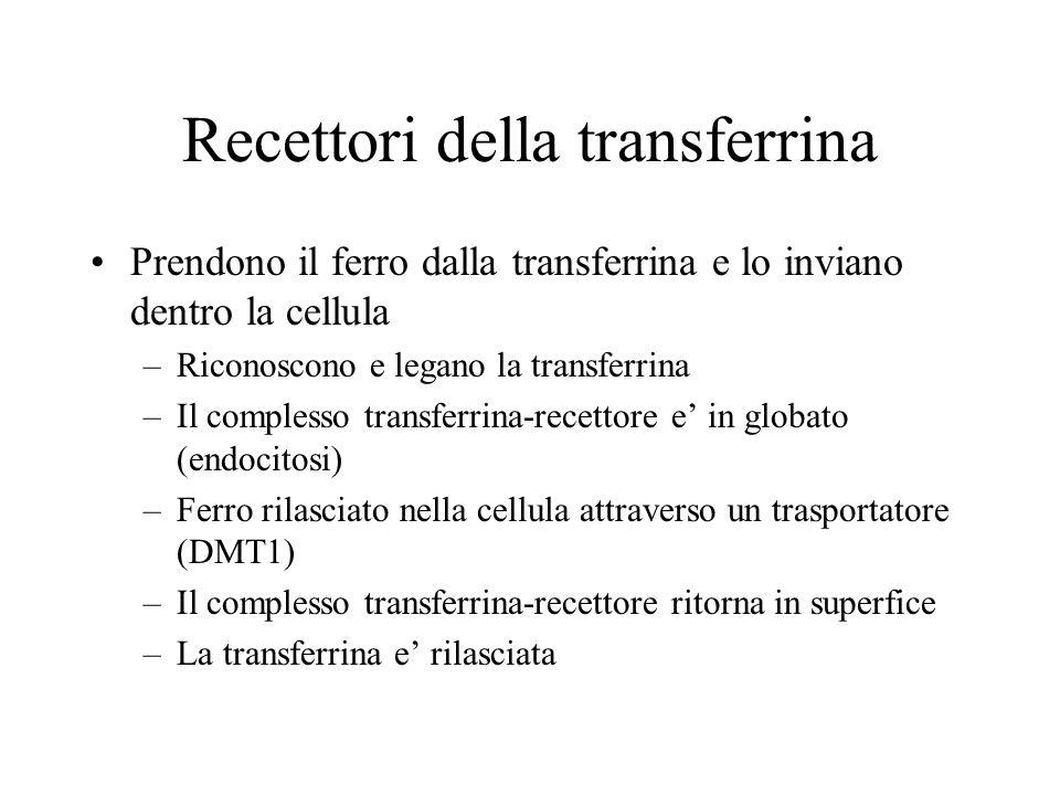 Recettori della transferrina Prendono il ferro dalla transferrina e lo inviano dentro la cellula –Riconoscono e legano la transferrina –Il complesso t