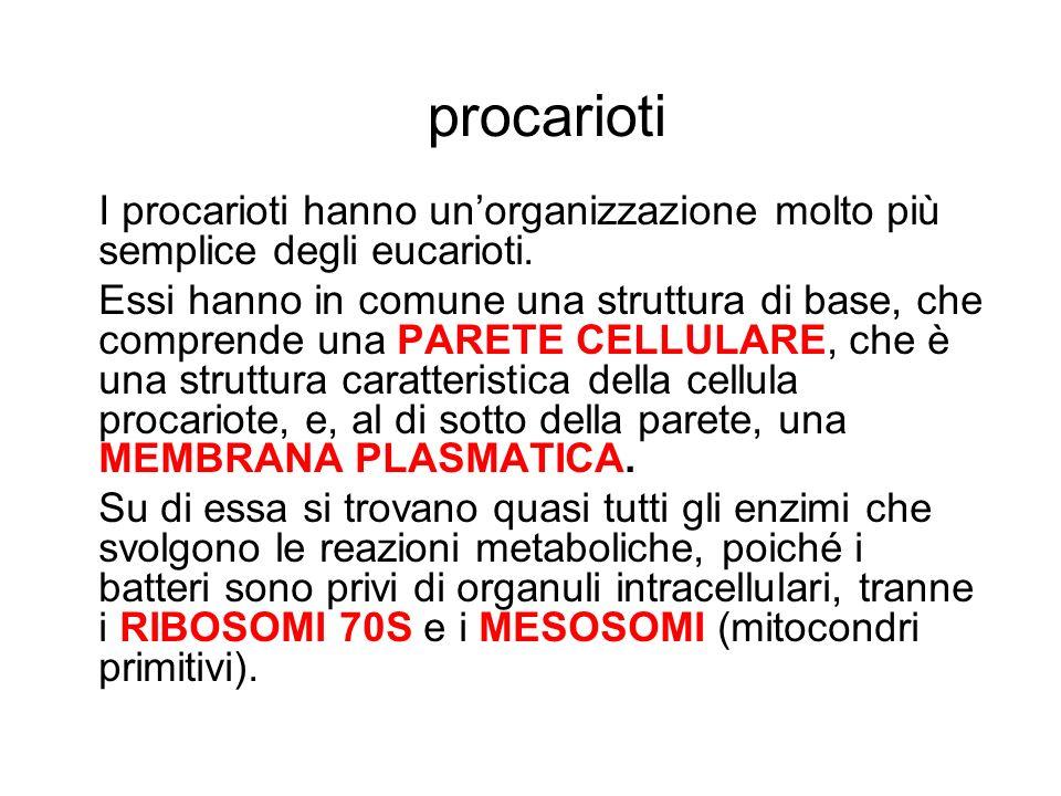 procarioti I procarioti hanno unorganizzazione molto più semplice degli eucarioti. Essi hanno in comune una struttura di base, che comprende una PARET